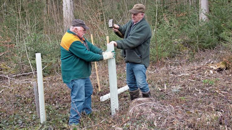 Der Einzelschutz für junge Bäume wird durch Holzstangen, die in den Boden gehauen wurden, gewährleistet.