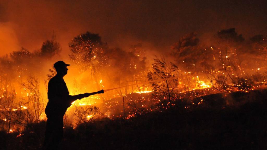 Erneut Waldbrand in Griechenland ausgebrochen