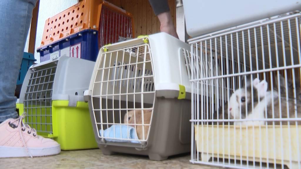 Tierschützer retten über 100 Kaninchen