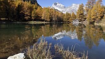 Der Herbst von seiner schönsten Seite: hier am Palpuognasee oberhalb Preda am Albulapass (Archiv)