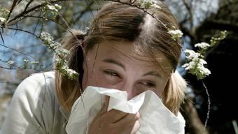 Der einen Freud, der anderen Allergie: Frühling lässt Pollen fliegen (Symbolbild)