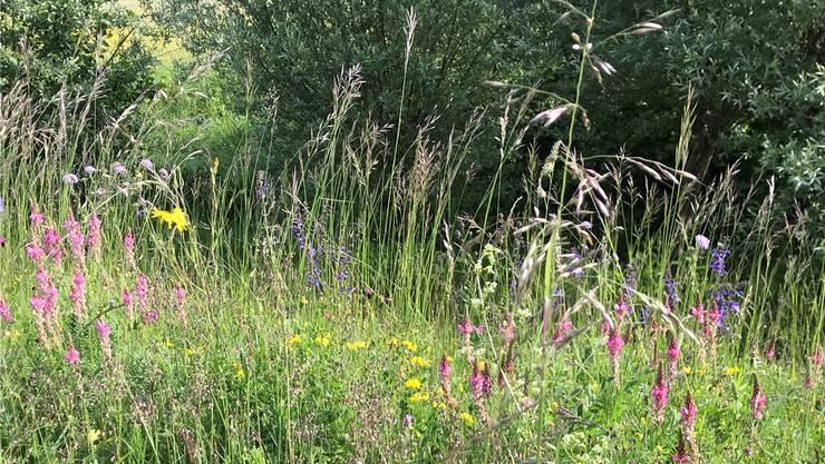 Eine artenreiche Wildblumenwiese entstand.