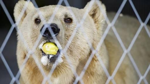 Das Bärenland Arosa sorgt für gute Zahlen