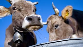 Für Nancy Holten sind Kuhglocken reine Tierquälerei. Auf Facebook hat sie eine Gruppe gegründet und will so gegen die alte Tradition kämpfen.