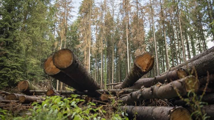 Ein vom Borkenkäfer befallenes Waldstück.
