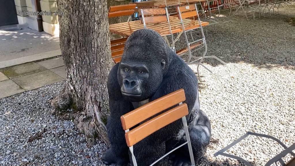 «Rüdiger wo bist du?» Bierhübeli-Gorilla wird vermisst