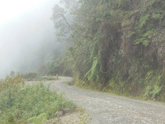 Die Todesstrasse führt mitten durch den Urwald