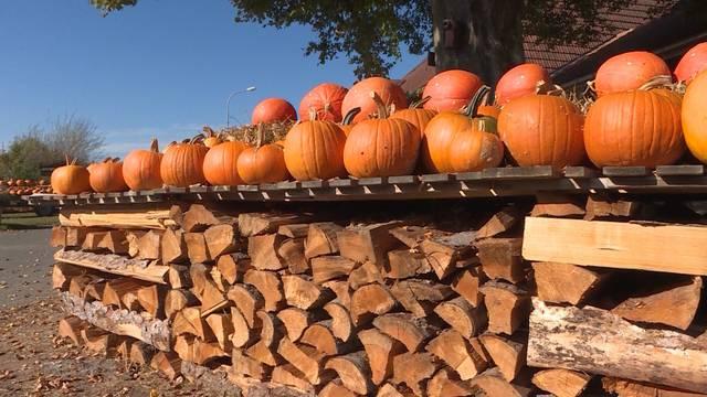 Herbst bringt Kürbis-Wahnsinn mit sich
