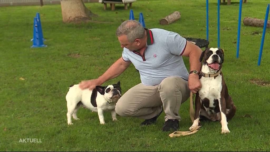 Beissende Hunde suchen ein neues Zuhause
