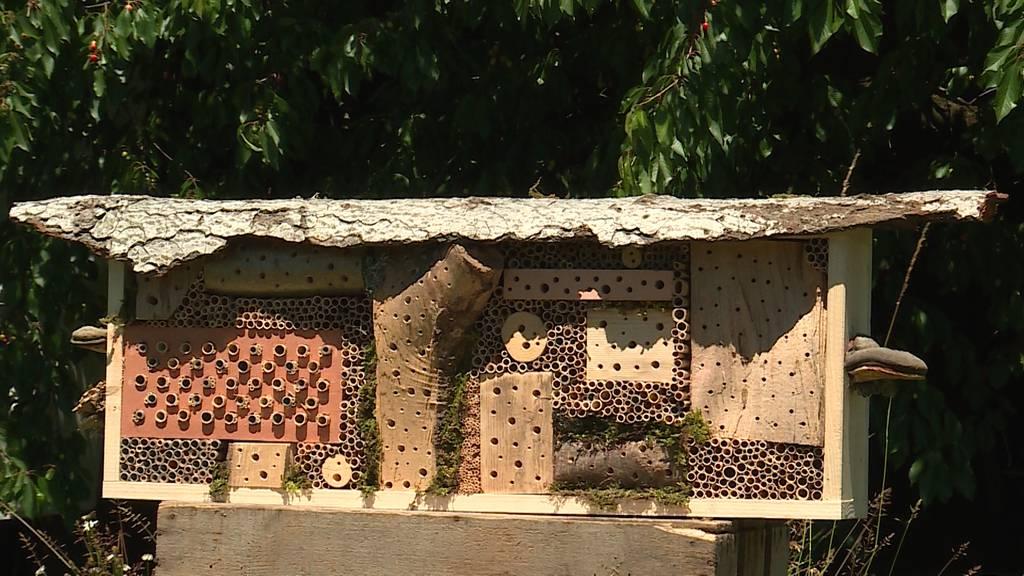 Hotel für Bienen