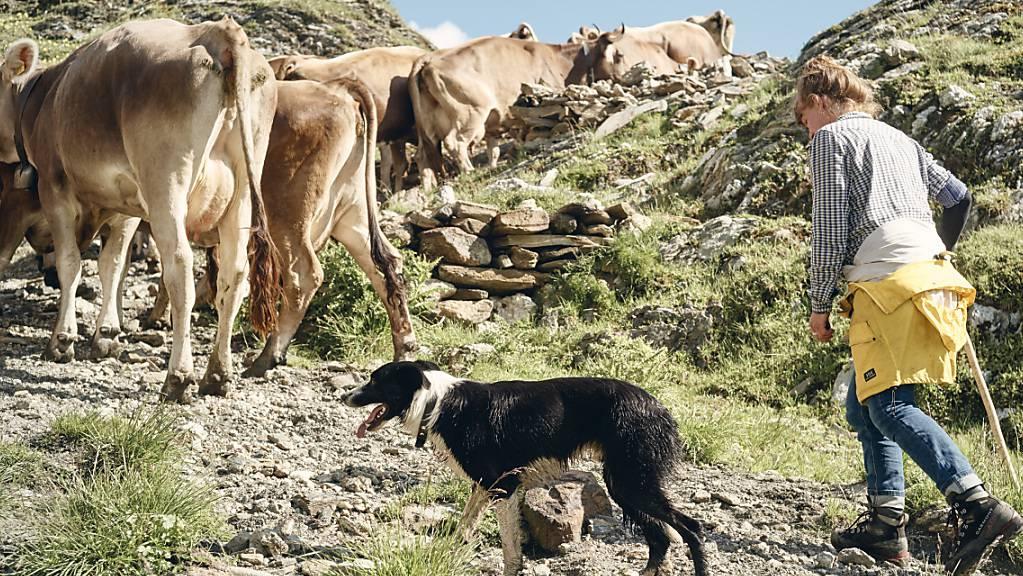 Das Parlament will Partnerinnen und Partner von Landwirtinnen und Landwirten besser schützen. Insbesondere für Bäuerinnen sollen die finanziellen Risiken reduziert werden. (Symbolbild)