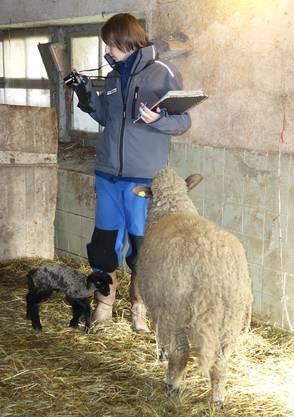 Die Bereichsleiterin Fachstelle Tierschutz und veterinärrechtlichebei einer Kontrolle.