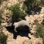 Einer von etwa 350 Elefanten-Kadavern in Botswana. Die Ursache für das Massensterben der Dickhäuter ist ein Rätsel.