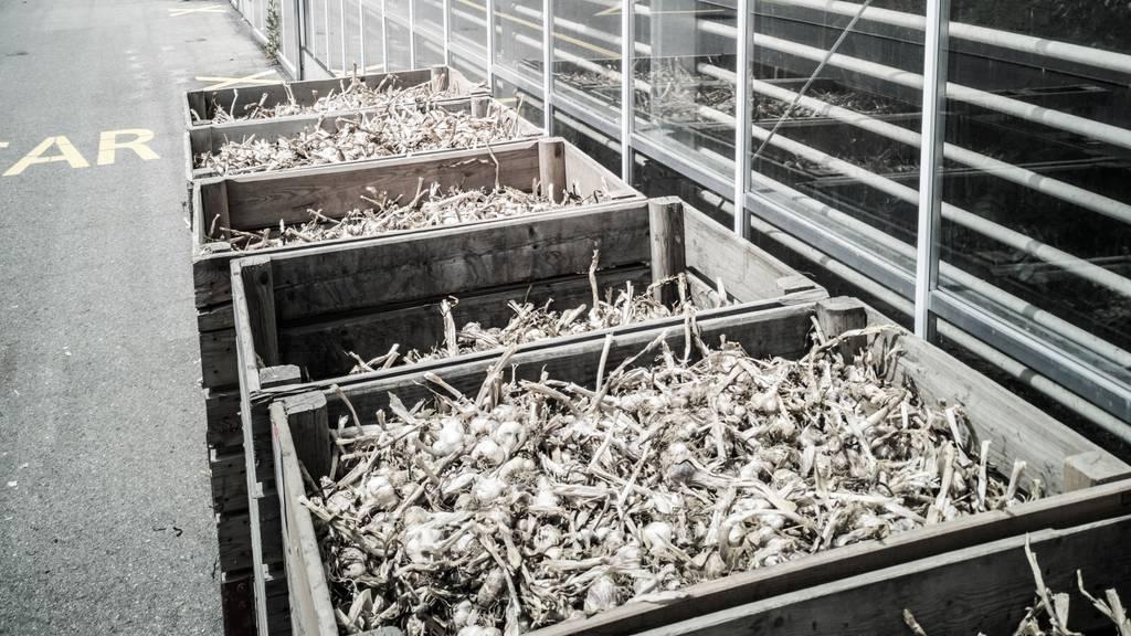 Zentralschweizer Gastronomen-Crews retten vier Tonnen Chnobli