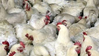 In China stirbt eine Frau am neuen Vogelgrippevirus.