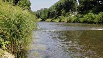 Gut Ding will Weil(e) haben: Bei der Renaturierung der Wiese möchte Weil am Rhein auch ein Wort mitreden.