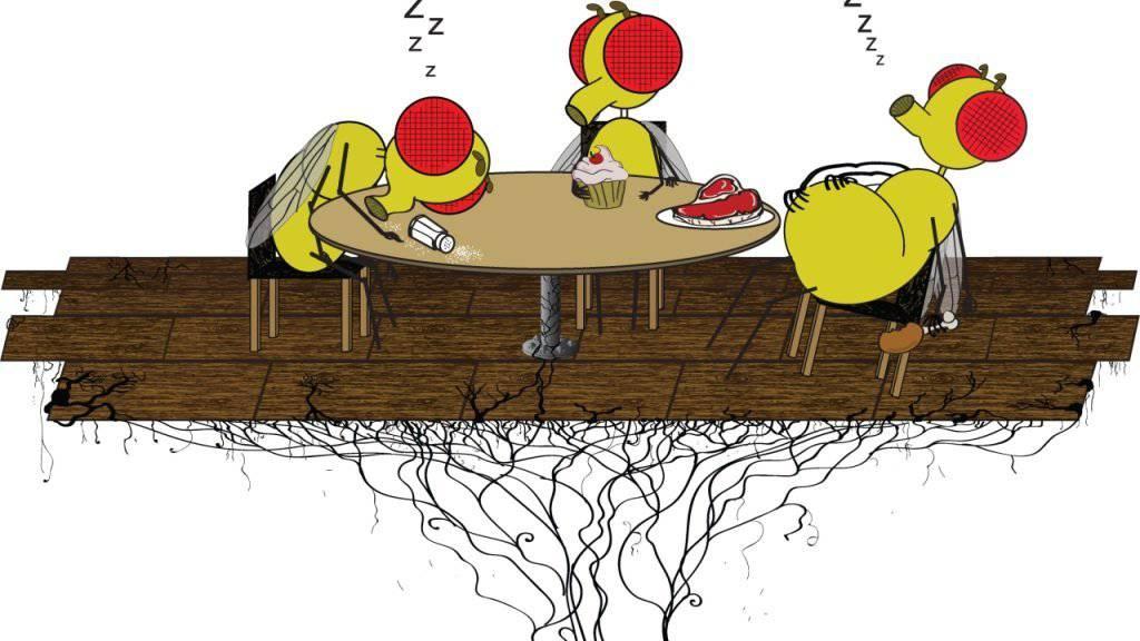 """Nicht nur wir Menschen kämpfen mit der Müdigkeit nach dem Essen: Auch die Taufliege Drosophila melanogaster kennt das """"Fresskoma"""". US-Forscher haben das Phänomen bei den Insekten untersucht."""