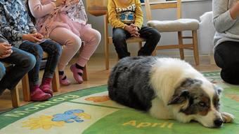 Die Eltern müssten der Anwesenheit des Schulsozialhundes zustimmen. (Archiv)