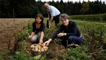 Karin Stoop, Sandra Schöni (beide «Perspektive») sowie Organisator Urs Bucher erlesen beim Schwallerhof in Recherswil die Kartoffeln, aus denen am Samstag Rösti werden soll.