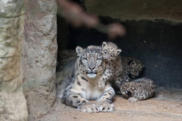 Mamma Mayhan mit den Jungen