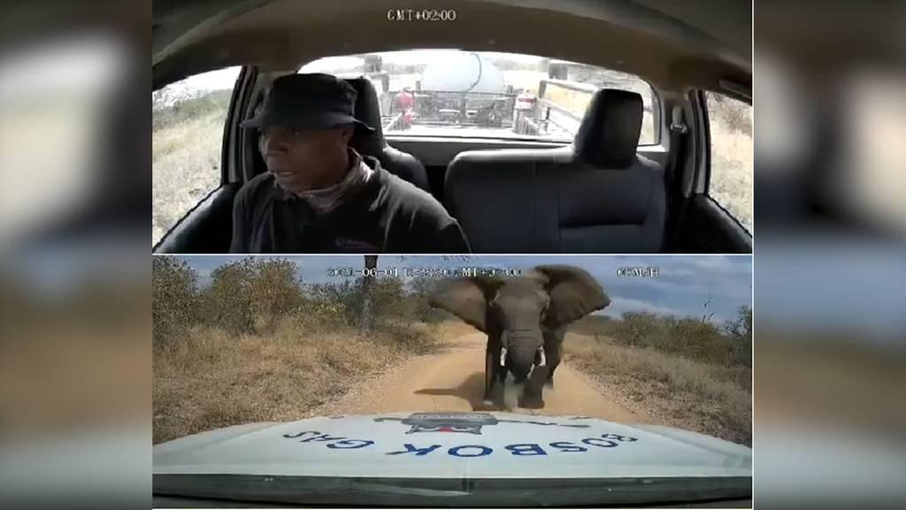 Elefant attackiert Tankwagen