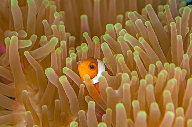 Auch der kleine Nemo haust im Aquarium