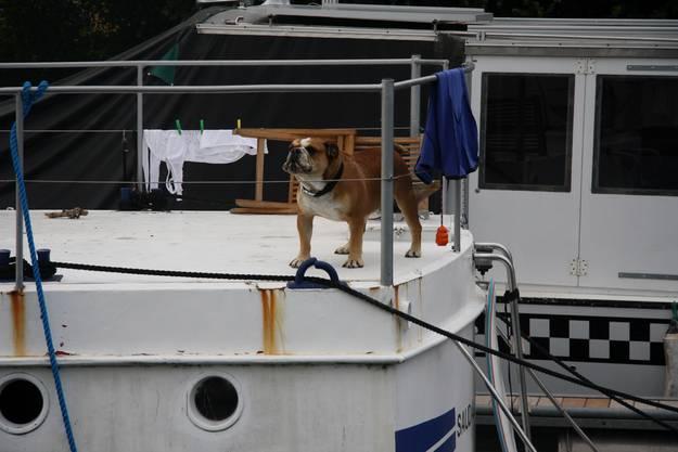 Ein vierbeiniger Matrose bewacht sein Schiff.