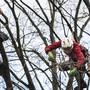 Kletterer schneiden Bäume