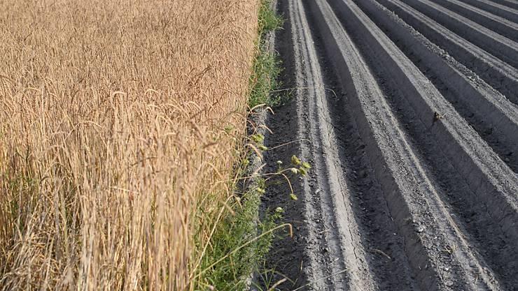 In der Ostschweiz ist die Trockenheit gross. Der Kanton Thurgau reagiert nun mit einem Wasserentnahmeverbot. (Symbolbild KEYSTONE/Gian Ehrenzeller)