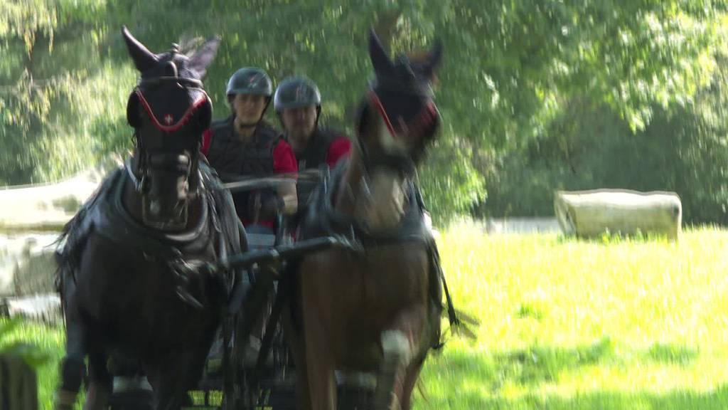 Nichts für Zartbesaitete: WM-Training mit Pferd und Wagen