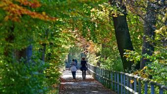 Herbst im Niederamt