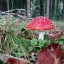 Glückspilze konnten dieses Jahr länger Pilze suchen als sonst. (SymbolbildI)