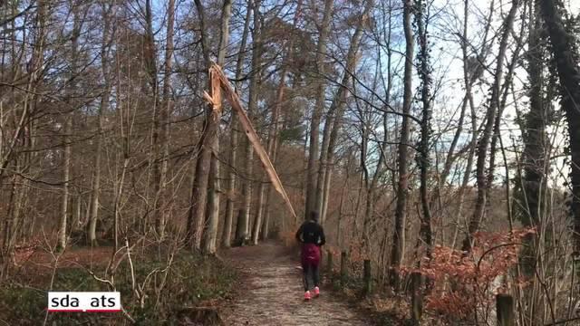 Der Dählhölzliwald wird zum Hindernisparcours