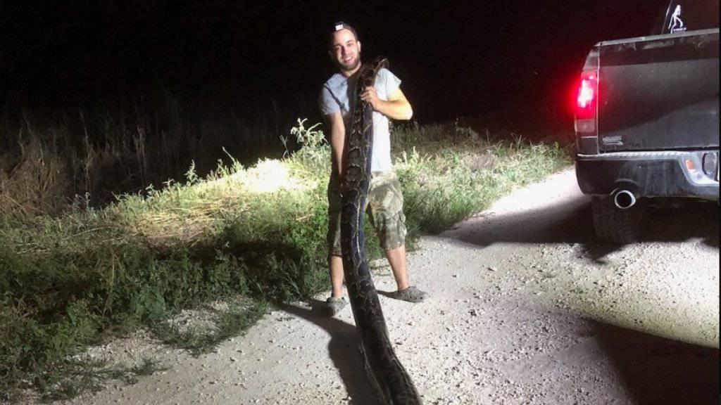 Rekordverdächtig: Die in Florida gefangene Python hat eine Länge von 5,3 Metern und ein Gewicht von rund 60 Kilo.