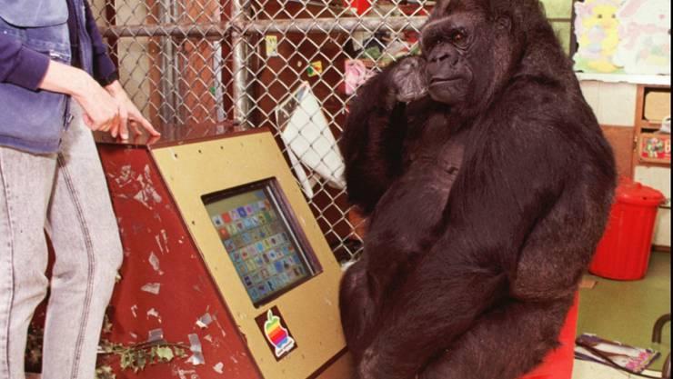 Die meisten Affen erkennen ihr eigenes Spüiegelbild