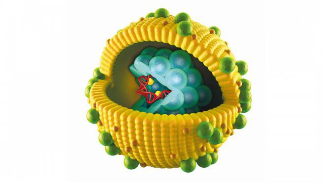 Modell eines Hepatitis-C-Virus. Illustration: Fotolia