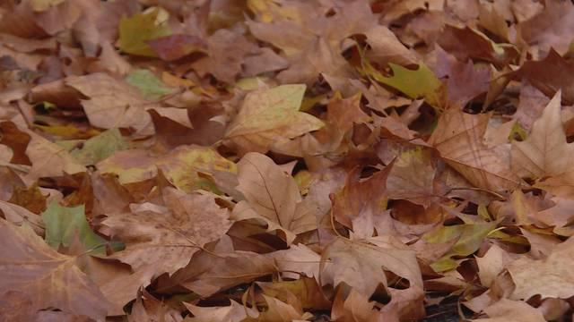 Herbstliches Bern