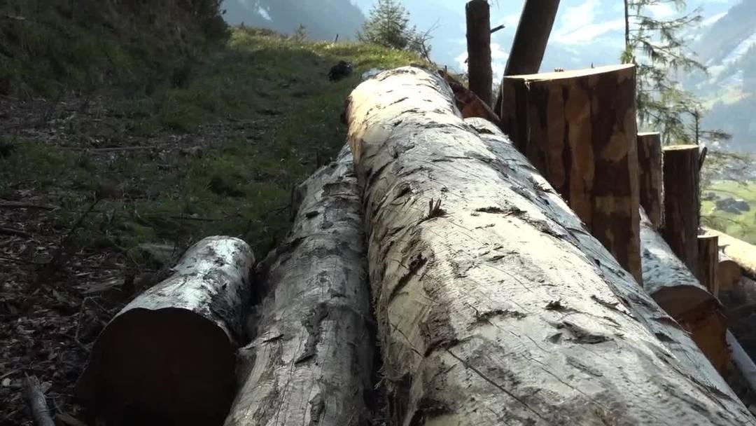StäheliChiara_Video_Holzenergie_Woodwaste