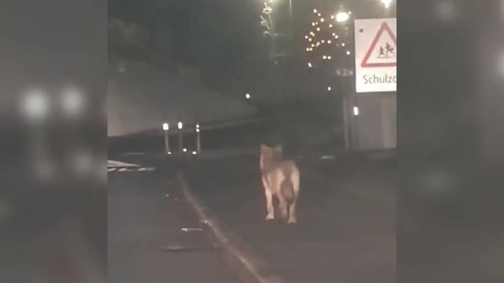Kurznachrichten: Wolfsabschuss, Rock in Frauenfeld, Unfall