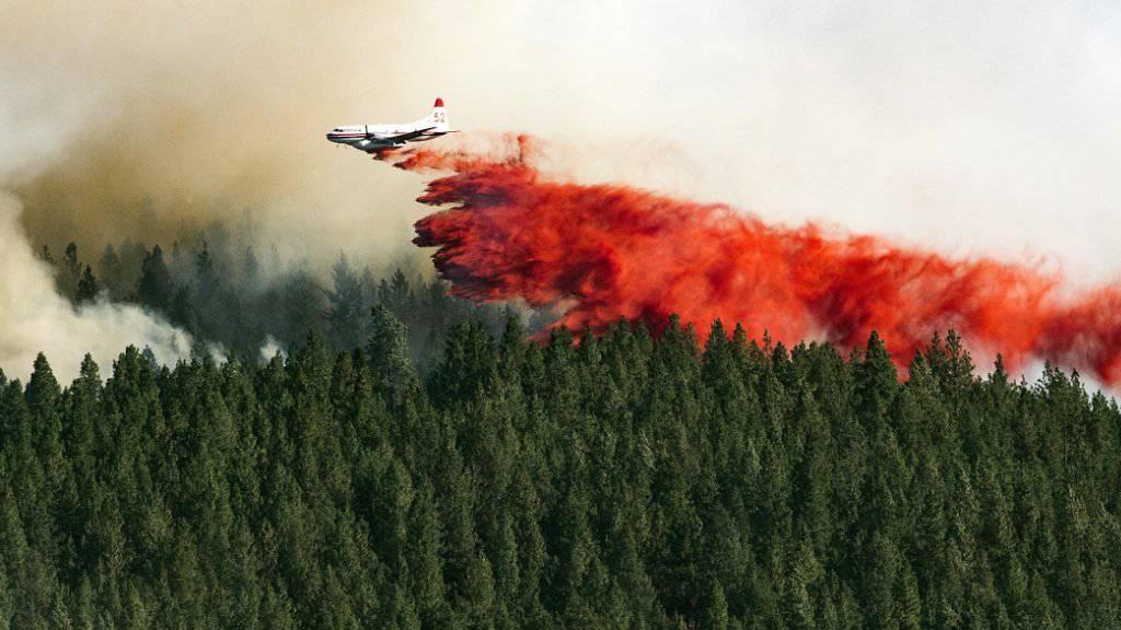 Löschflugzeuge sollen die Brände im westlichen US-Bundesstaat Washington eindämmen, hier bei Spokane. Hunderte Menschen verliessen bereits ihre Häuser.