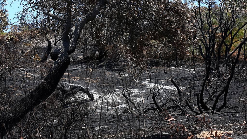 Zwei Australier nach Feuer auf Fraser Island zu Geldbussen verurteilt