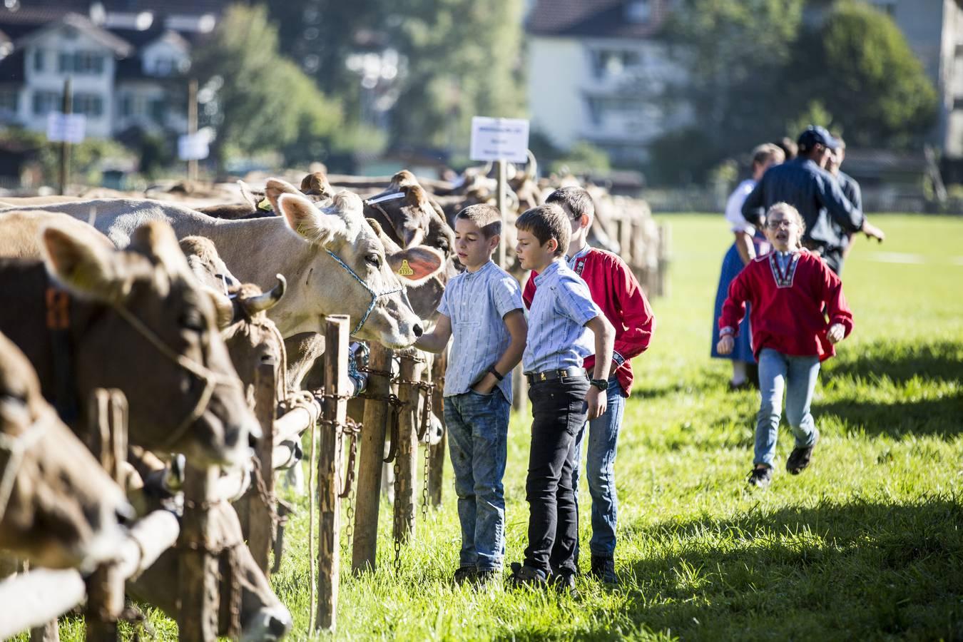Die erste Viehschau der Saison findet in Häggenschwil statt. (© Tagblatt/Mareycke Frehner)