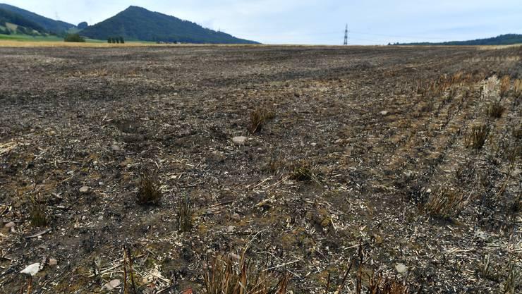 Gemäss der Einschätzung des Feuerwehrkommandanten sind rund drei Aren Boden abgebrannt.