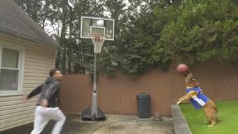 Was für ein Team: Der amerikanische Basketballspieler Max Pearce und Schäferhund Koa ergänzen sich auf dem Spielfeld bestens.
