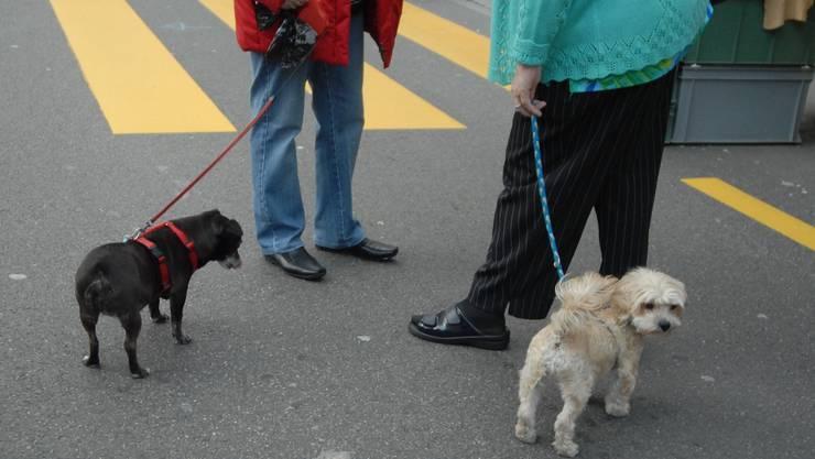 Birsfelderinnen und Birsfelder müssen für ihre Hunde künftig tiefer in die Tasche greifen. Foto: az-archiv
