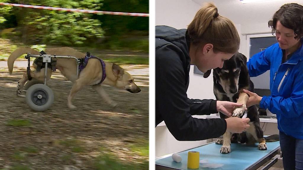 Handicap-Day / Nothelferkurs für Hundehalter