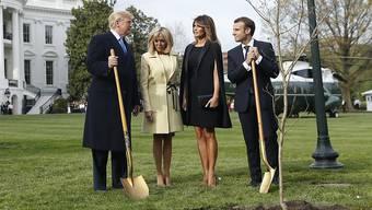 Macron und Trump pflanzten im Garten des Weissen Hauses eine Eiche aus dem französischen Belleau Wald, wo im Ersten Weltkrieg Tausende US-Soldaten ums Leben kamen.