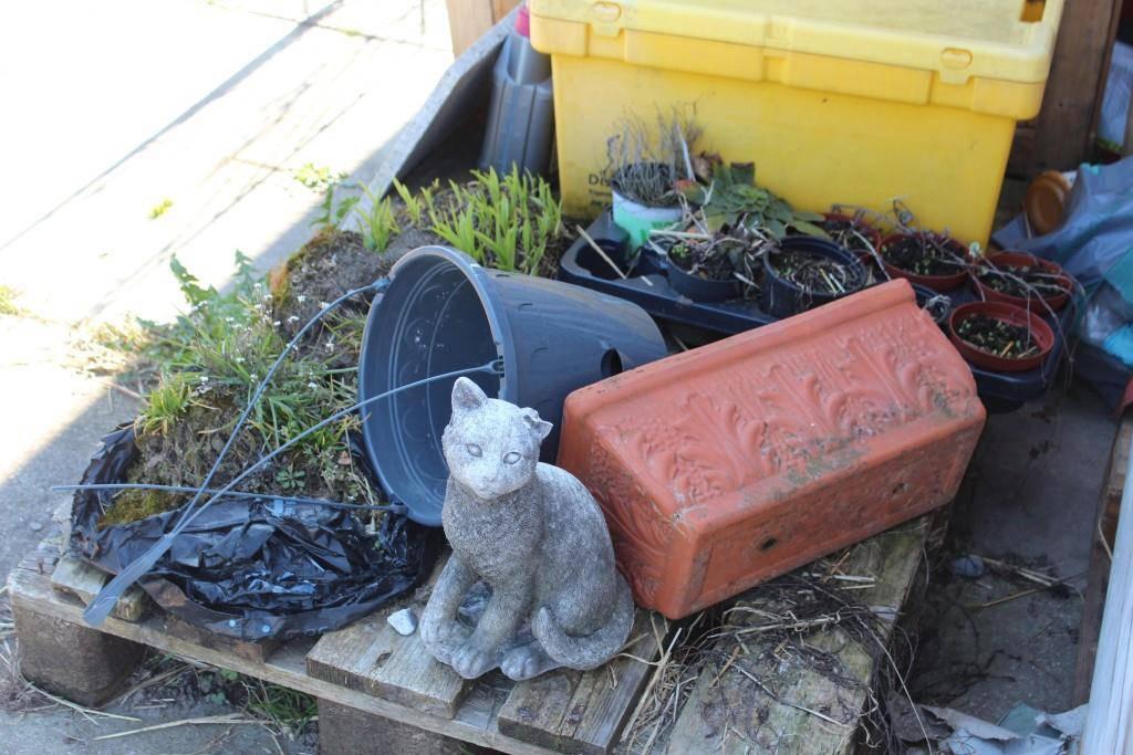 Das Veterinäramt fand 18 lebende Katzen und 21 tote in ihrem Tiefkühler