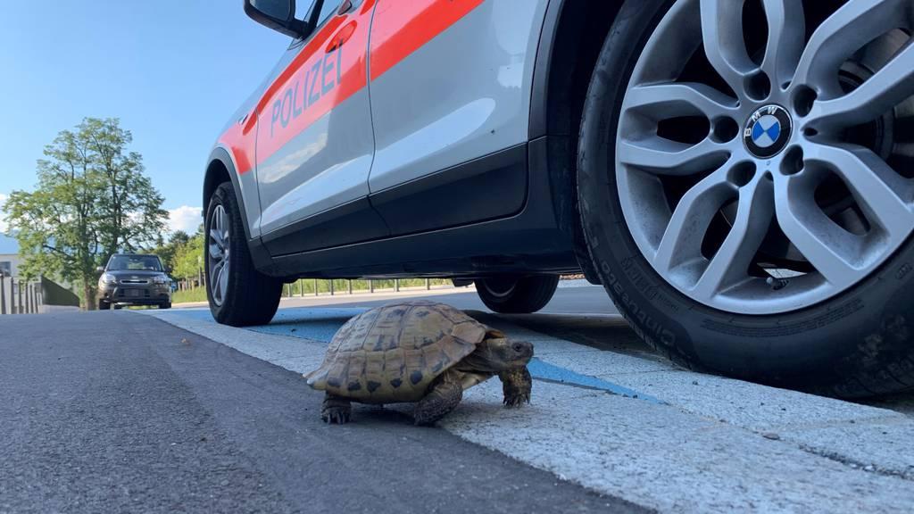 Tierischer Einsatz: Polizei rettet herrenlose Schildkröte