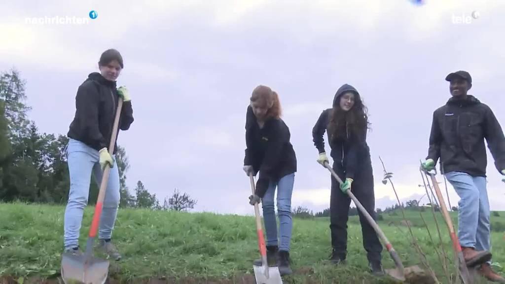 Schüler helfen auf dem Bauernhof